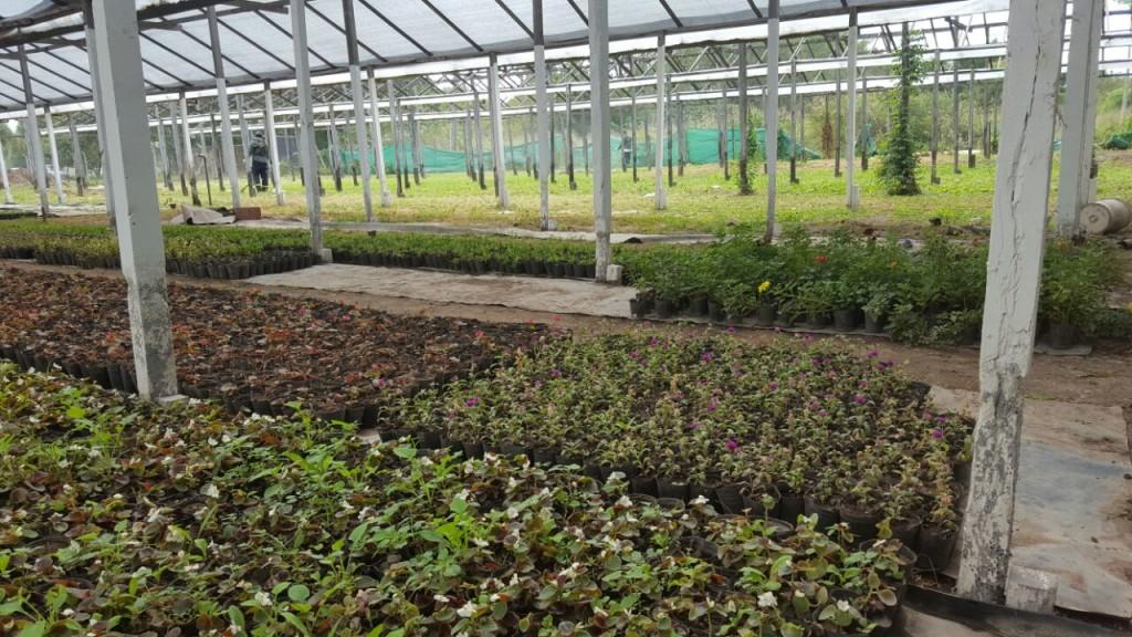 El vivero municipal producir nuevos plantines para for Viveros en escobar