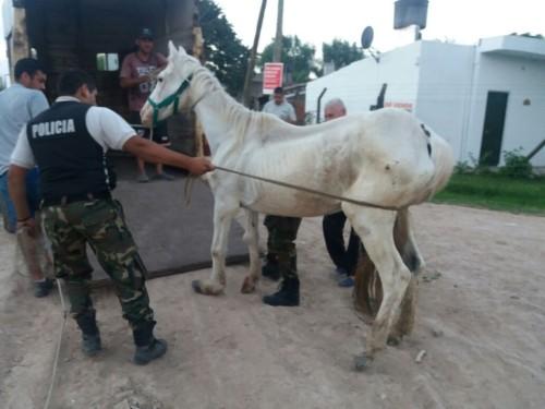 thumbnail_caballo rescatado 1